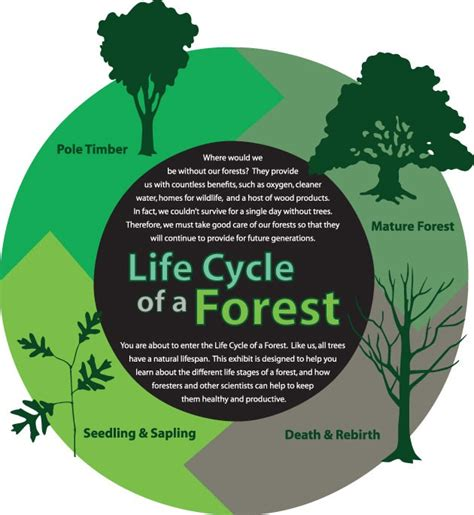 lifespan of a life cycle of the forest blasseydesign