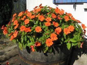 Jardiniere Fleurie Plein Soleil : quelle fleur resiste au soleil ~ Melissatoandfro.com Idées de Décoration