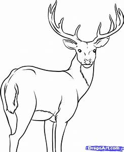 How to Draw a Deer, Step by Step, forest animals, Animals ...