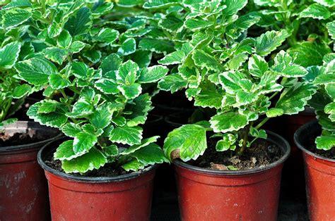 Gajimo brojne vrste biljaka u našem domaćinstvu. | All ...