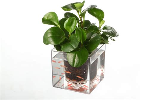 Eyeglass Holder Stand by Double Deck Self Watering Desk Potted Plant Feelgift