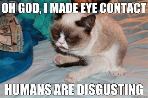 Mere Cat Meme - mere cat meme 28 images credit union think tank grumph grumpy cat meme sur memegen c mere
