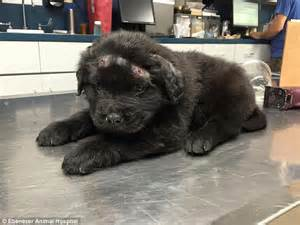 puppy dog brody   miraculous recovery
