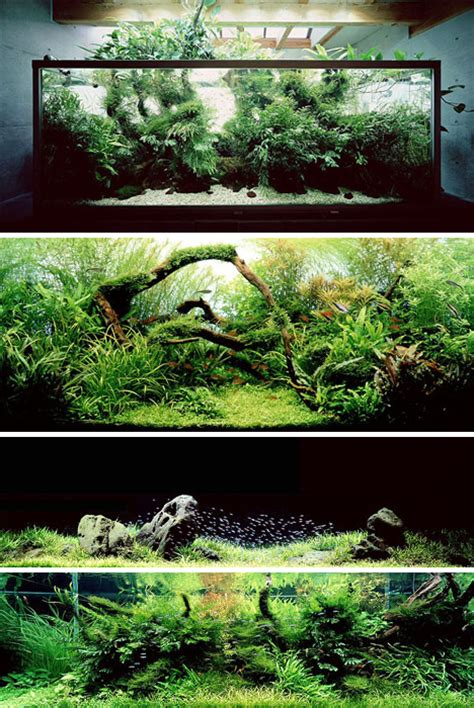 Japanese Aquascape by 7 Amazing Aquariums And Fish Tank Designs Systems Urbanist