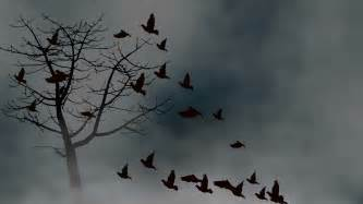 Birds Flying Into A Cloudy Sky Motion Background