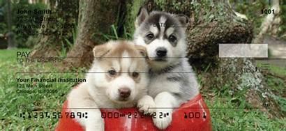 Dog Malamute Alaskan Checks Sled Dogs Personal