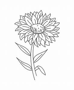 Drawing Blooming Aster Flower Coloring Pages | Bulk Color