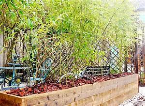 Bambou En Pot Pour Terrasse : la plantation des bambous en bacs ~ Louise-bijoux.com Idées de Décoration