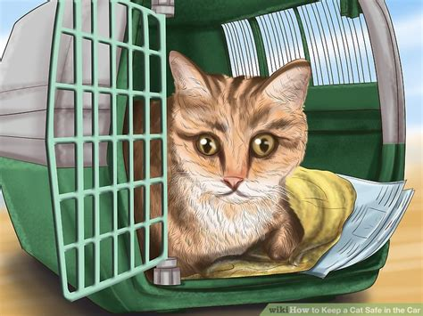 how to keep cats cars how to keep a cat safe in the car 12 steps with pictures
