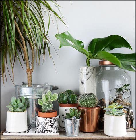 plante dans une chambre 1000 idées sur le thème terrarium pour plantes grasses sur