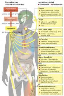 symptome müdigkeit schwäche übelkeit schilddrüsenunterfunktion symptome herz ninewsxm