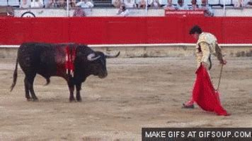 Cachos GIFs - Find & Share on GIPHY