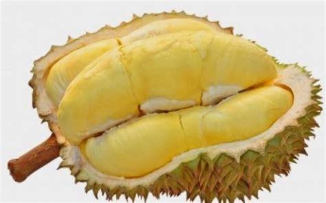 bolehkah ibu hamil makan buah durian simak ulasannya sehat magazine