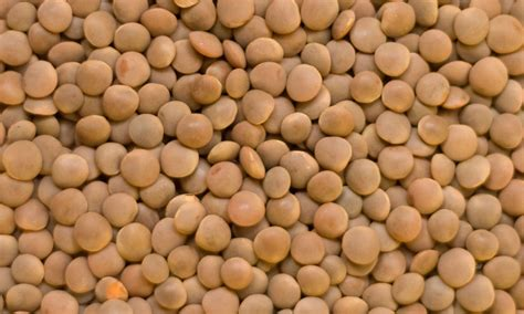 what are lentils northern gate lentils
