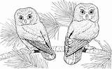 Owl Coloring Colouring Printable Adults Adult Animal Sheets Difficult Flying Teenagers Forget Supplies Don sketch template