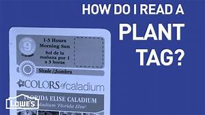 How To Read A Plant Tag For Planting Instructions