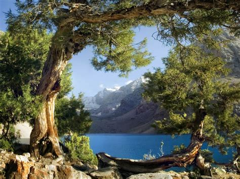 Extra Large Bathroom Rugs by Wall Mural Wallpaper Trees Mountain Lake Poster 127 Cm X