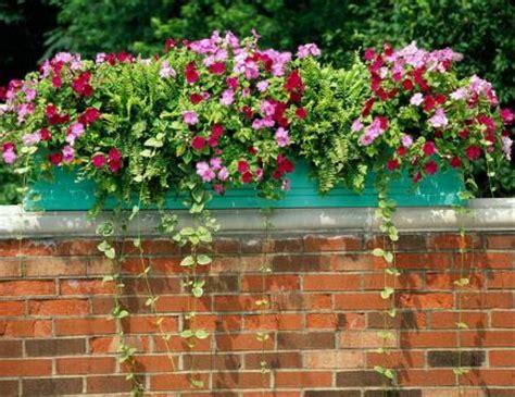 bright  beautiful window box planters midwest living