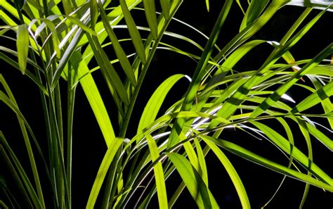 palm leaves wallpapers palm leaves stock