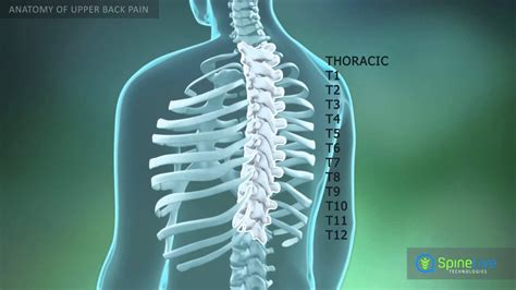 Upper back pain is usually due to strained muscles, joint dysfunction, or a herniated disk, although these things are very rare. Upper Back Pain Anatomy - YouTube