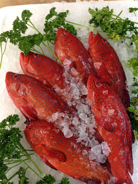 catch tottenham seafood grouper strawberry thomsons fish