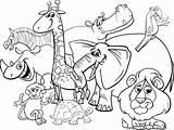 Coloring Illustrations Vector Animals Cartoon Safari Clip sketch template