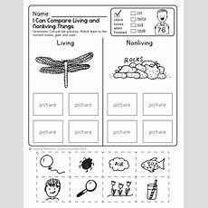 Free Science Worksheet! Kids Love This!  Diy Ideas