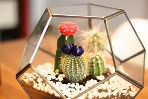 Pflanzen Für Terrarium : blog kauf dich gluecklich ~ Orissabook.com Haus und Dekorationen
