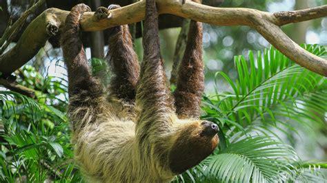 1920 X 1080 Lazy Days Slothpng