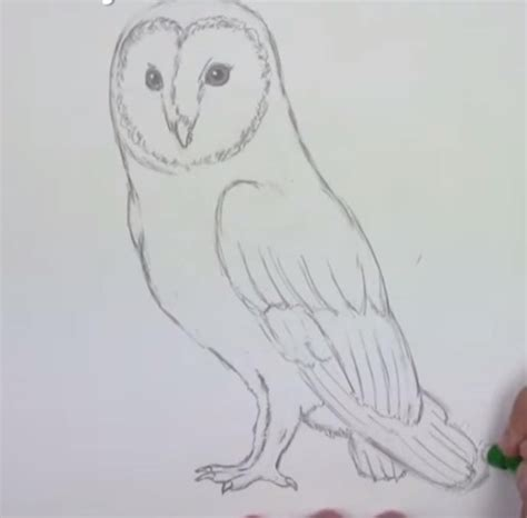 eule malen einfach eule einfach zeichnen dekoking diy bastelideen dekoideen zeichnen lernen