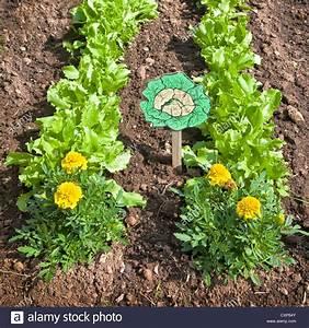 Pflanzen In Der Wohnung : junger blattsalat pflanzen wachsen in der wohnung garten zusammen mit einer grenze von ~ A.2002-acura-tl-radio.info Haus und Dekorationen