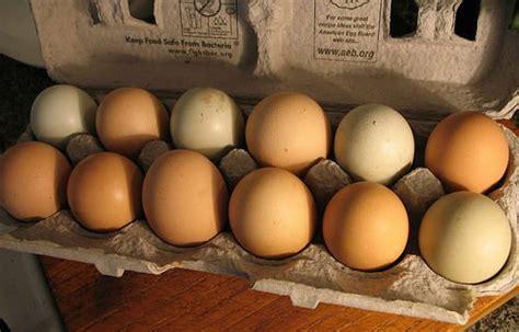 how are bird eggs fertilized fertilize the egg game no