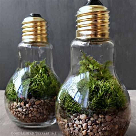 light bulb terrarium light bulb plant terrarium currently unavailable apollobox