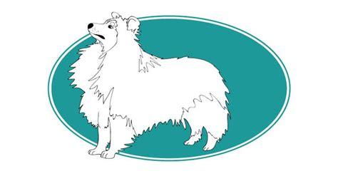17 meilleures id 233 es 224 propos de poneys des shetland sur