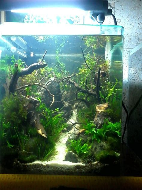 694 Best Planted Nano Tanks Images On Pinterest Fish