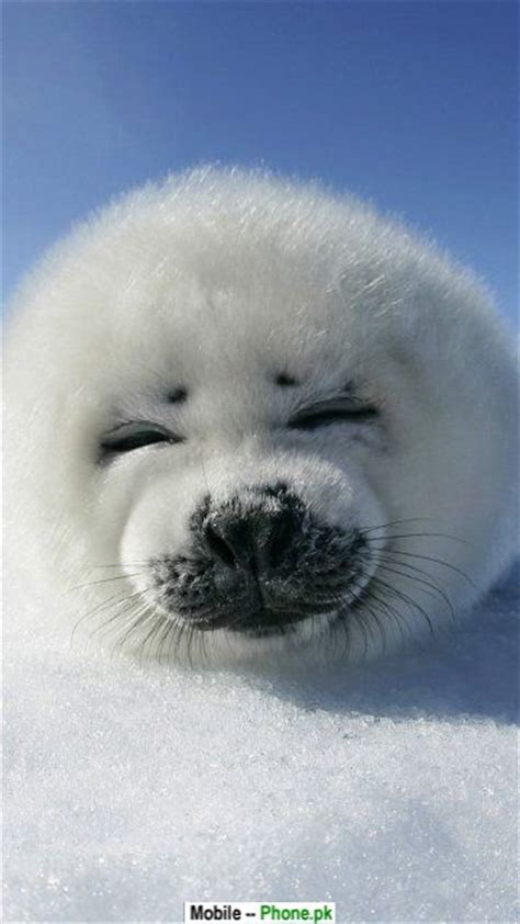 cute animal pictures wallpapers mobile pics