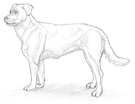 tiere malen leicht einen hund malen und zeichnen