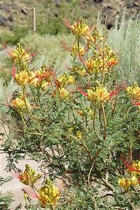 Flowering Desert Plant | Flickr - Photo Sharing!