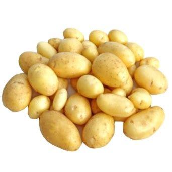 cuisiner pomme de terre nouvelle pommes de terre nouvelles 500g t bonnamour ferme de