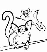 Glider Sugar Coloring Pages Gliders Svg Animal Clipart Printable Sugarglider Animals Silhouette Drawings Realistic Colouring Drawing Clip Pet Sheet Easy sketch template