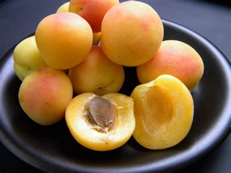 Sweet Apricot (700g approx) — MomoBud