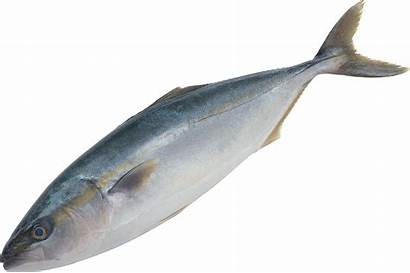 Pescado Fish Poissons Tubes Ou Gifs Pngimg