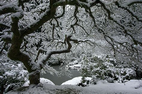 beautiful pictures  winter  oregon