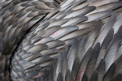 Incredible Feather Art By Kate Mccgwire «twistedsifter