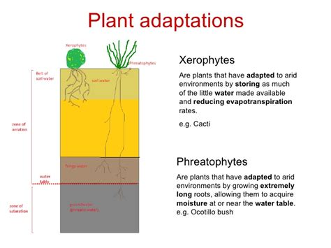 Structural And Physiological Adaptations  The Chaparral Biome