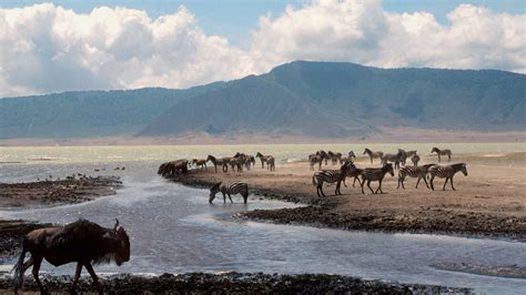 Ngorongoro Crater Holidays  Holidays To Ngorongoro Crater