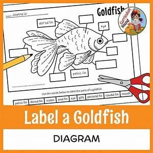 Label A Fish Diagram - Parts Of A Fish Labeling
