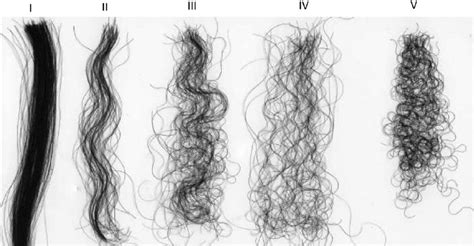 Types Of Hair by Images Of Various Types Of Hair Illustrating Their