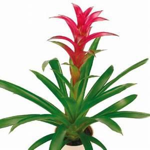 Plante et bouquet 123 fleurs objet deco deco for Le feng shui et les couleurs 16 plante et bouquet 123 fleurs objet deco deco
