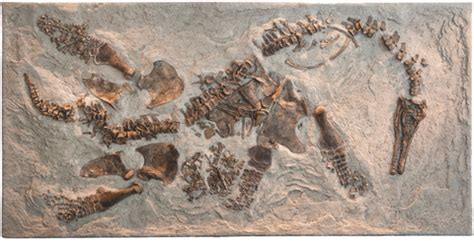 pregnant plesiosaur fossil  shed light  ancient